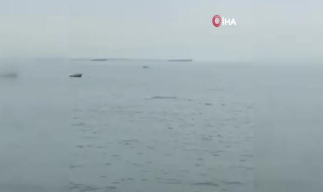 Yunusların denizdeki gösterisi kamerada